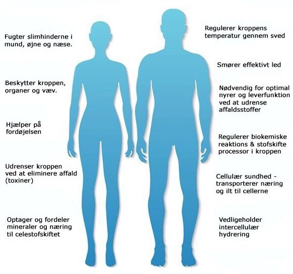 vand i kroppen årsag